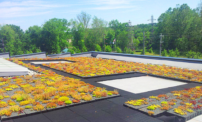 Schuylkill Riverfront Academic and Heritage Center green roof. Photo by Matt Cadwalader